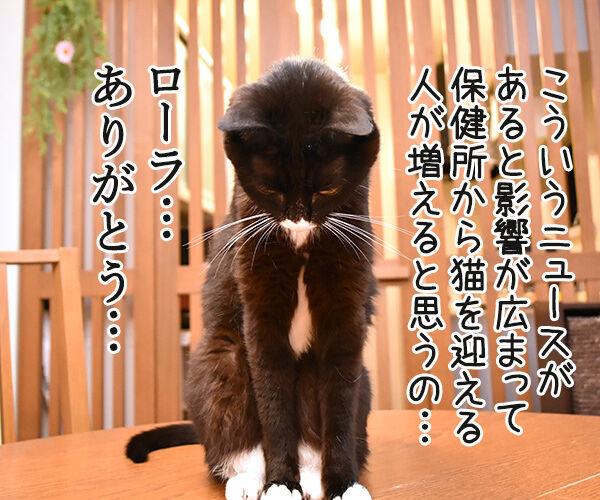 ローラさんが保険所から猫を引き取って家族にしたんですってッ 猫の写真で4コマ漫画 2コマ目ッ