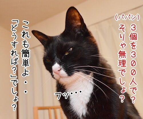 算数の問題ですッ!! 猫の写真で4コマ漫画 3コマ目ッ