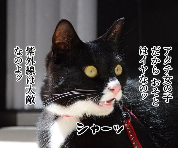 女子に紫外線は大敵なのよッ 猫の写真で4コマ漫画 1コマ目ッ