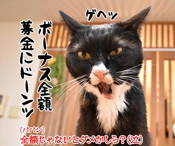 豪雨災害のボランティアに行こうかしら? 猫の写真で4コマ漫画 4コマ目ッ