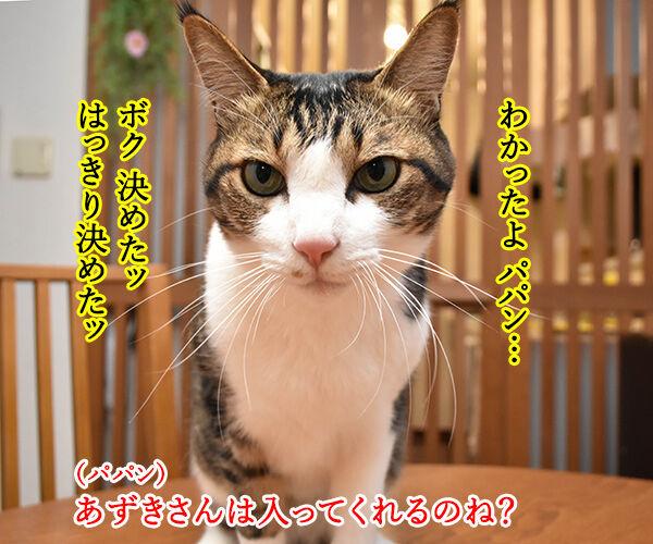 4月26日は『よい風呂の日』なんですってッ 猫の写真で4コマ漫画 3コマ目ッ