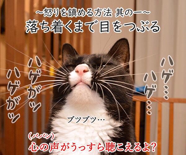 怒りを鎮める方法を試してみましょ 猫の写真で4コマ漫画 2コマ目ッ