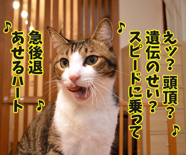 ゲレンデがとけるほど恋したい 猫の写真で4コマ漫画 3コマ目ッ