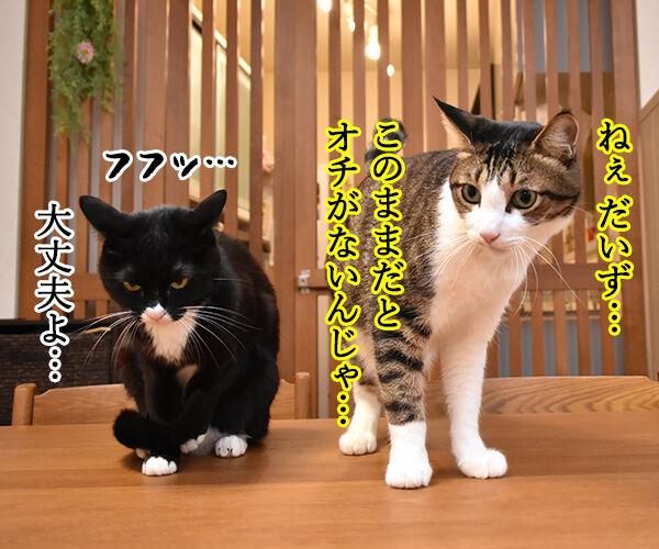 LINEスタンプの第二弾が販売されたのよッ 猫の写真で4コマ漫画 3コマ目ッ