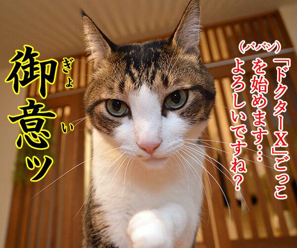 ドクターXごっこ「御意ッ」 猫の写真で4コマ漫画 1コマ目ッ
