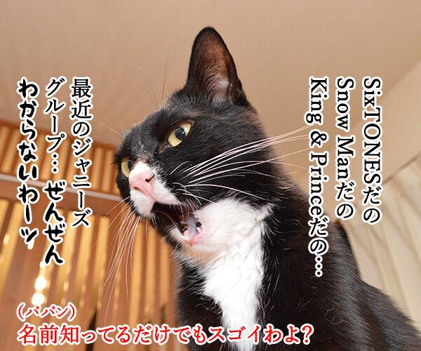 アタチがジャニーズで一番なのは…? 猫の写真で4コマ漫画 1コマ目ッ