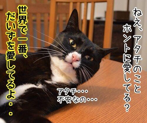 今すぐKiss me 猫の写真で4コマ漫画 1コマ目ッ