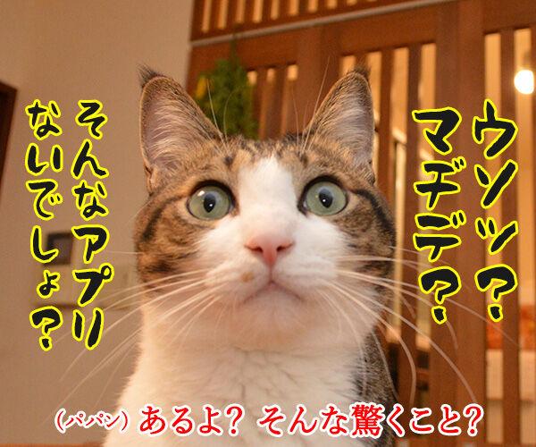 パパンは大掃除しないでYoutubeなのッ 猫の写真で4コマ漫画 3コマ目ッ