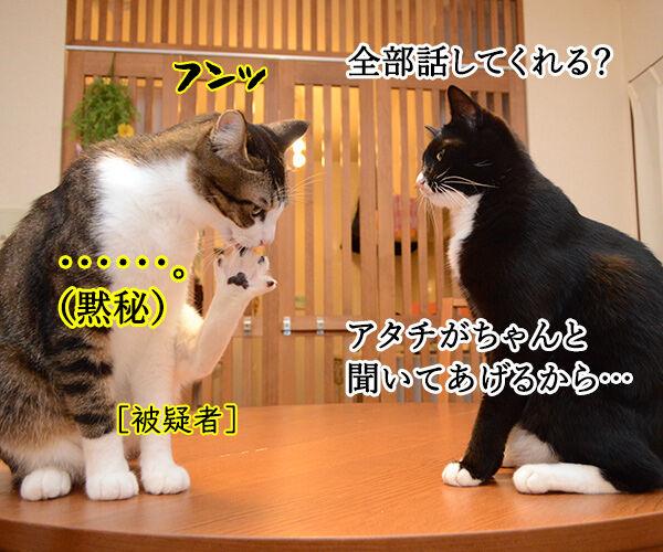 緊急取調室 猫の写真で4コマ漫画 2コマ目ッ