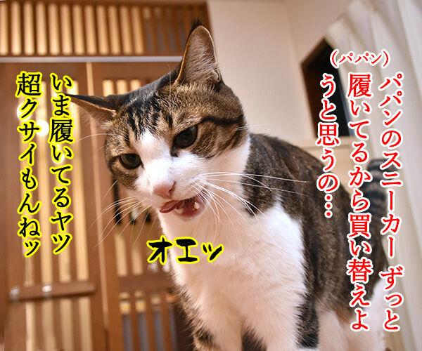 スニーカーを買い替えようと思うのッ 猫の写真で4コマ漫画 1コマ目ッ