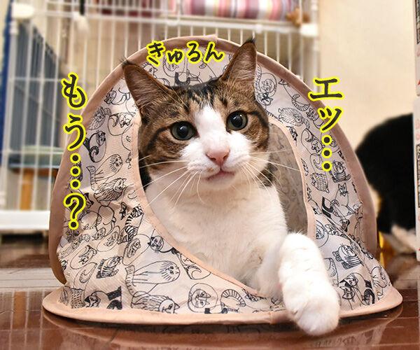 そんな顔しないで… 猫の写真で4コマ漫画 2コマ目ッ