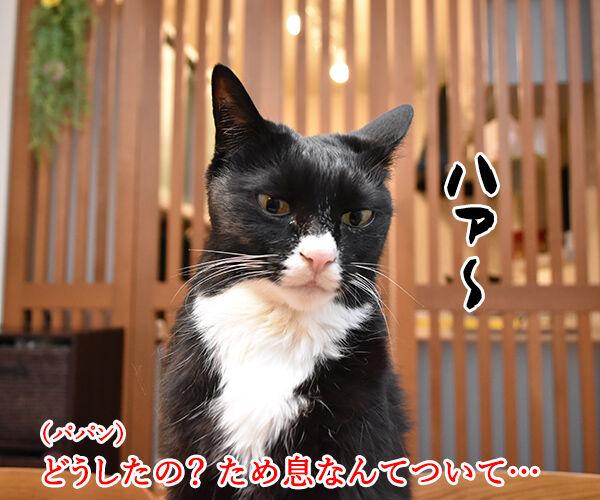 だいずさんが落ち込んでるのッ 猫の写真で4コマ漫画 1コマ目ッ