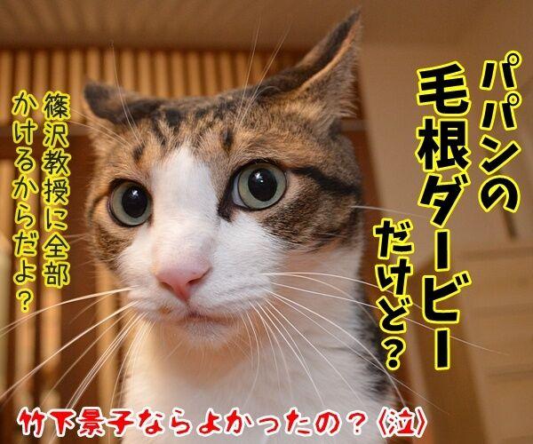 倍率ドーン!! さらに倍ッ!! 猫の写真で4コマ漫画 4コマ目ッ