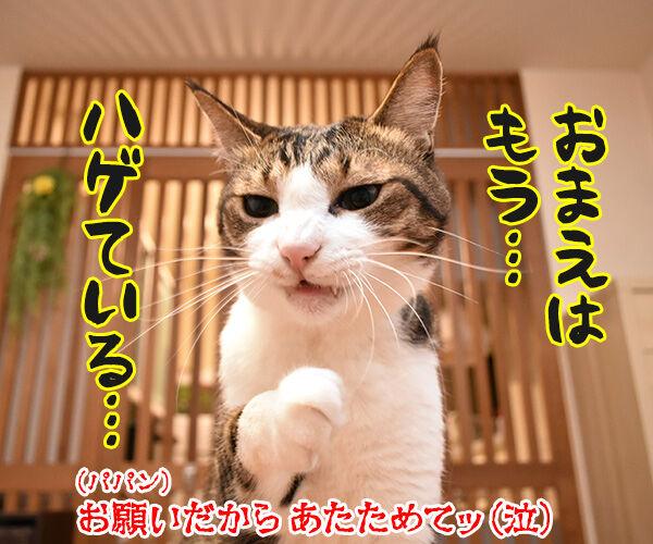 あずだいマートでお買い物 其の三 猫の写真で4コマ漫画 4コマ目ッ