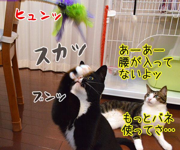 アドバイス 猫の写真で4コマ漫画 2コマ目ッ