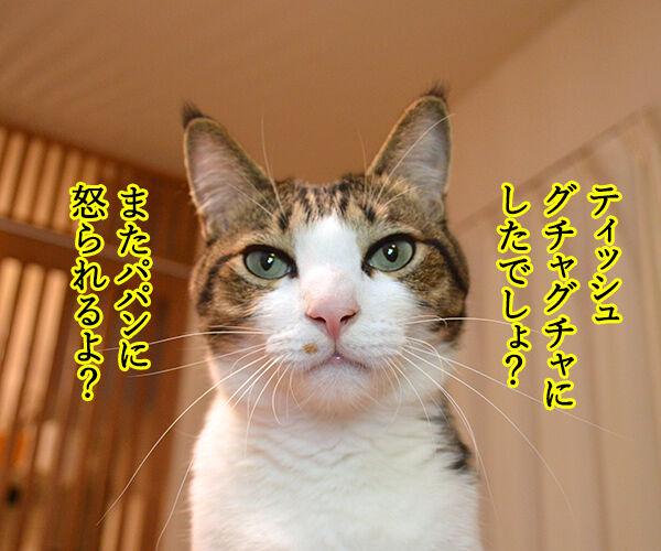 するつもり 猫の写真で4コマ漫画 1コマ目ッ