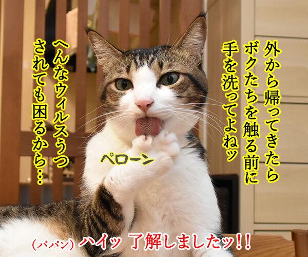 10月15日は『世界手洗いの日』なんですってッ 猫の写真で4コマ漫画 3コマ目ッ