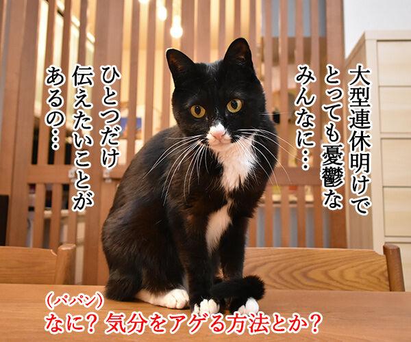 GWが終わっちゃったのよッ 猫の写真で4コマ漫画 3コマ目ッ