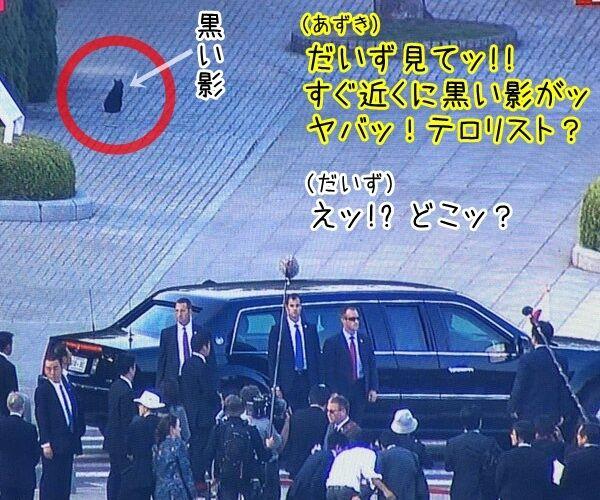 オバマ大統領が広島訪問ですってッ 猫の写真で4コマ漫画 3コマ目ッ