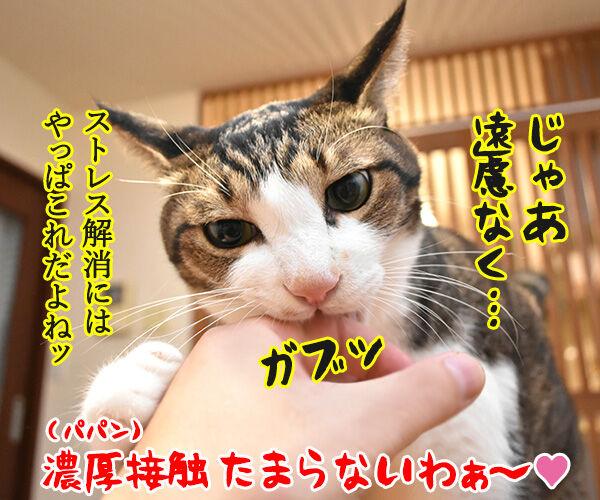 飼主から猫さんにコロナが感染しちゃったのよッ 猫の写真で4コマ漫画 4コマ目ッ