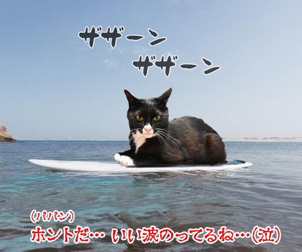 ギャル流行語大賞2018 『いい波のってんね~』 猫の写真で4コマ漫画 4コマ目ッ