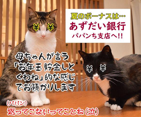 ボーナスを預けるならこの銀行よねッ 猫の写真で4コマ漫画 4コマ目ッ