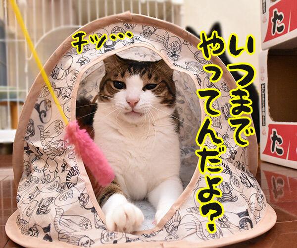 そんな顔しないで… 猫の写真で4コマ漫画 5コマ目ッ