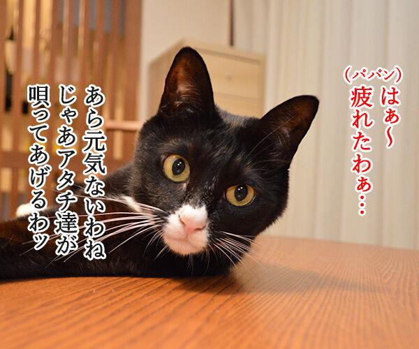 元気を出して(竹内まりや) 猫の写真で4コマ漫画 1コマ目ッ