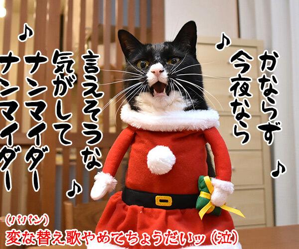 メリークリスマスだからパパンのために唄うのよッ 猫の写真で4コマ漫画 4コマ目ッ