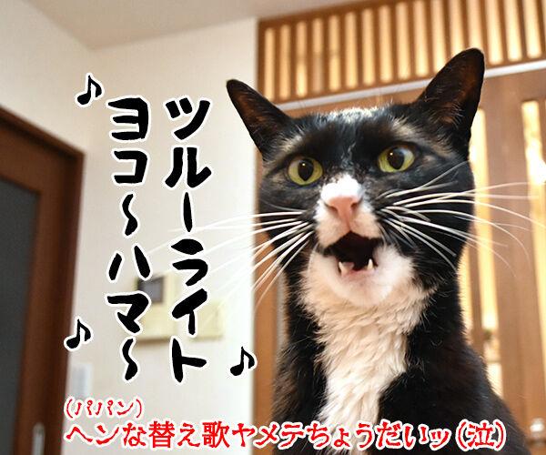 横浜の夜景ってキレイだよねッ 猫の写真で4コマ漫画 4コマ目ッ