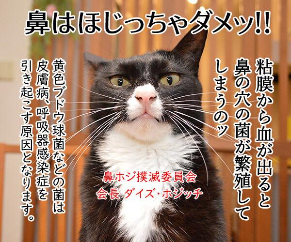 鼻をほじっちゃダメなのよッ 猫の写真で4コマ漫画 2コマ目ッ