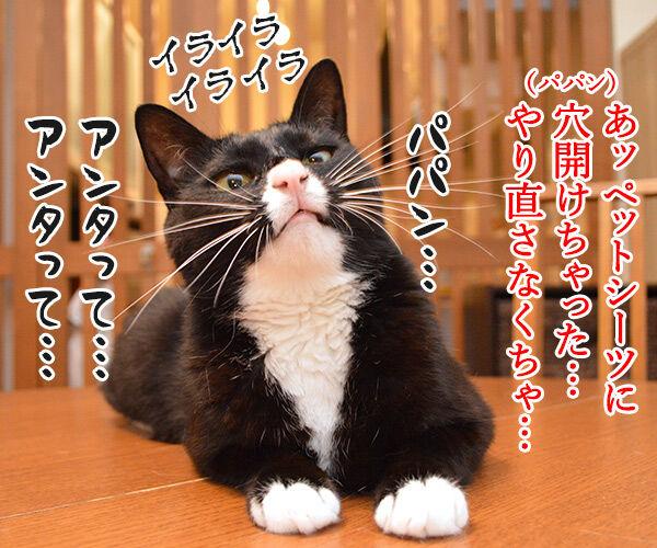 パパンてホントに…… 猫の写真で4コマ漫画 3コマ目ッ