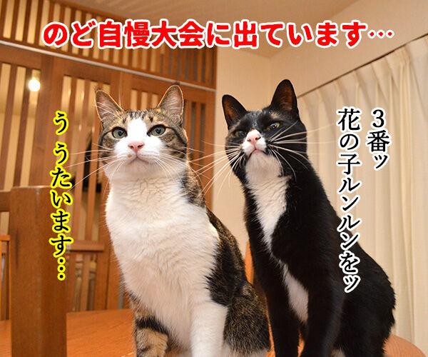 のど自慢大会 其の二 猫の写真で4コマ漫画 1コマ目ッ