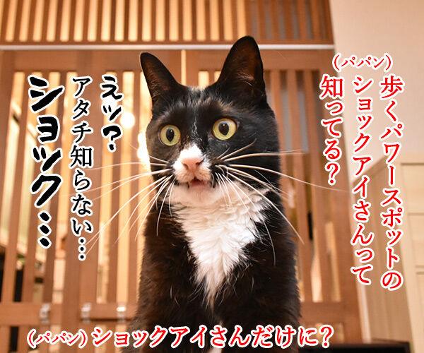ショックアイさんの待ち受け画像で運気アップなのよッ 猫の写真で4コマ漫画 1コマ目ッ