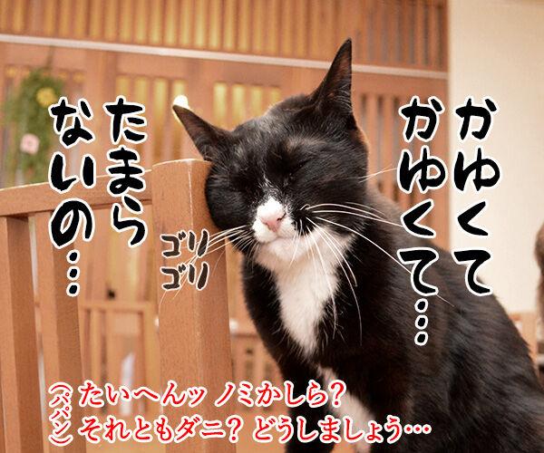 かゆいのよッ 猫の写真で4コマ漫画 3コマ目ッ