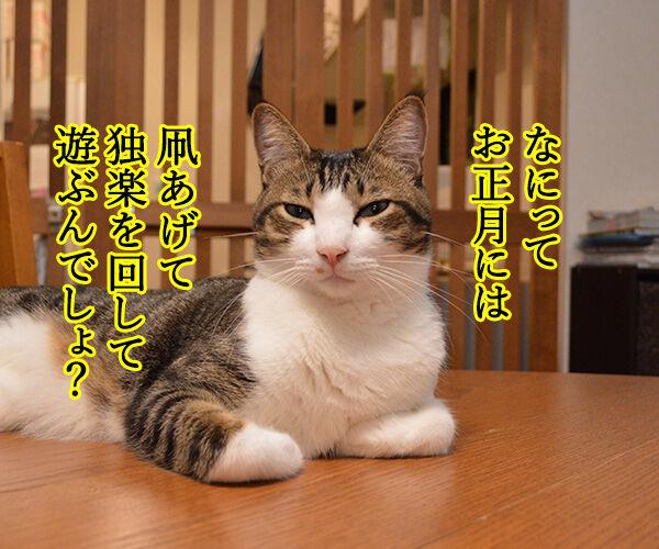 お正月にするコト 猫の写真で4コマ漫画 2コマ目ッ