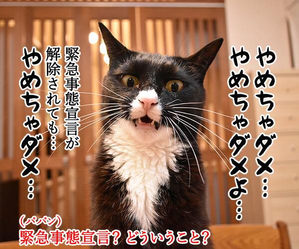 手越くんがジャニーズ事務所をやめちゃったのよッ 猫の写真で4コマ漫画 3コマ目ッ