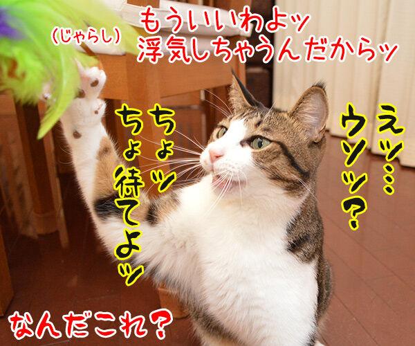 じゃらし的な彼女 猫の写真で4コマ漫画 4コマ目ッ