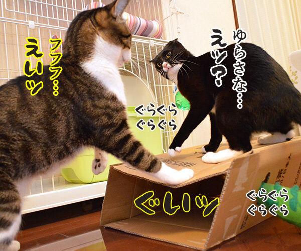 ゆらさないでッ 猫の写真で4コマ漫画 2コマ目ッ