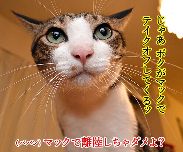 きょうは「ハンバーガーの日」だから 猫の写真で4コマ漫画 2コマ目ッ