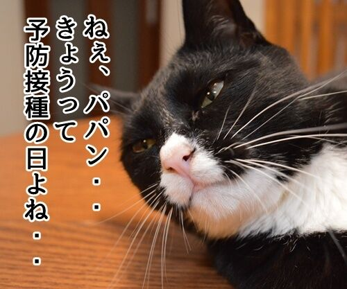 予防接種の日 猫の写真で4コマ漫画 1コマ目ッ