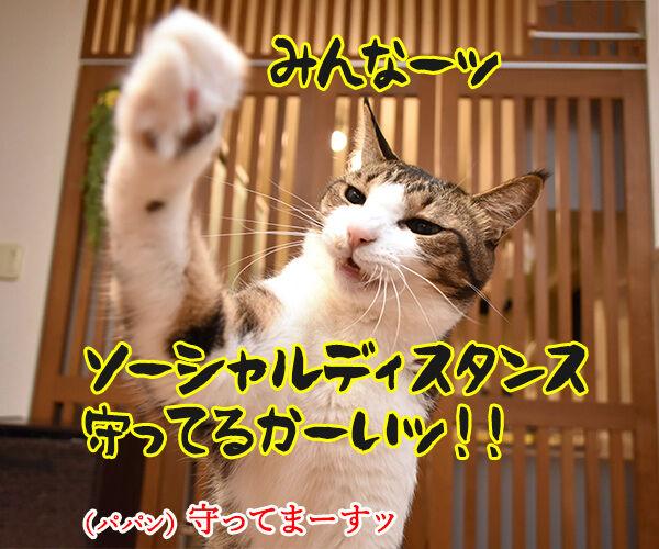 ソーシャルディスタンスのあるあるなのよッ 猫の写真で4コマ漫画 1コマ目ッ