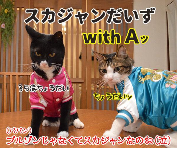 『ブルゾンちえみ』猫バージョン??? 猫の写真で4コマ漫画 4コマ目ッ