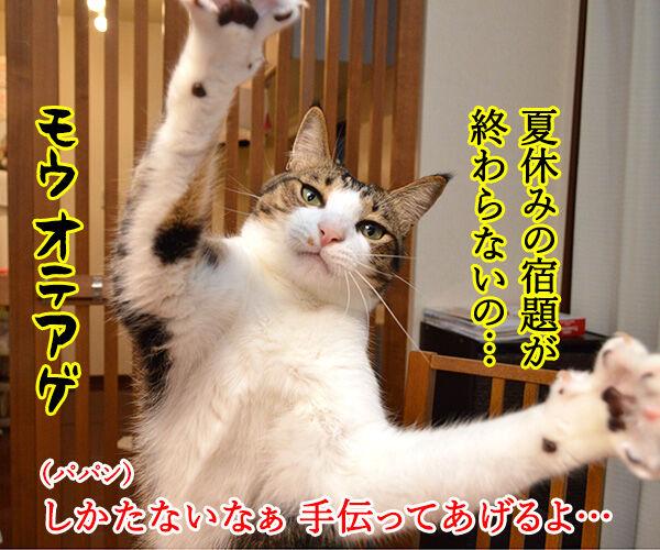 夏休みの宿題が終わらないの… 猫の写真で4コマ漫画 1コマ目ッ
