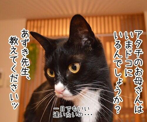 どんなことでもすぐ解決 猫の写真で4コマ漫画 2コマ目ッ