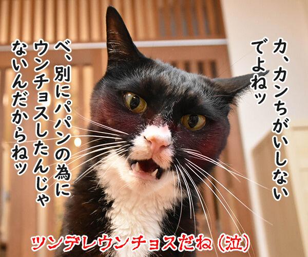 父の日なんて超ウンチョス 猫の写真で4コマ漫画 4コマ目ッ