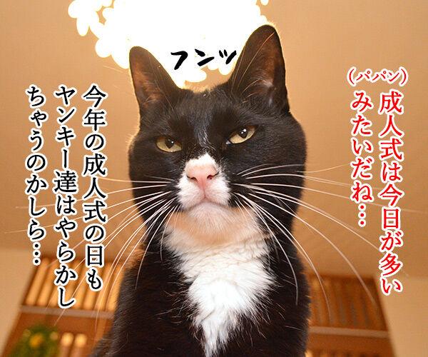 パパンの成人式は…… 猫の写真で4コマ漫画 1コマ目ッ