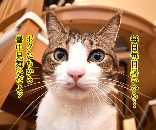 毎日暑いから 暑中お見舞い申し上げます 猫の写真で4コマ漫画 1コマ目ッ