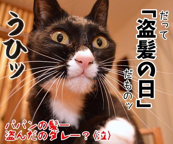 10月20日きょうは何の日? 猫の写真で4コマ漫画 4コマ目ッ
