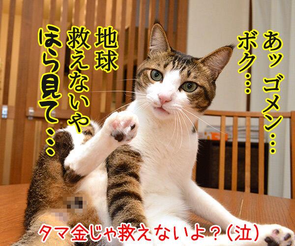 愛は地球を救えるのかしら? 猫の写真で4コマ漫画 4コマ目ッ